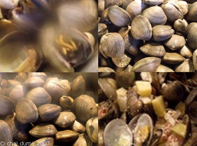 clam showder