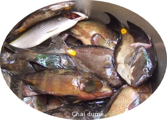 pêche du week-end
