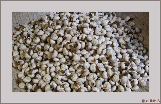 escargots à Fez