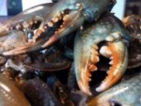 pince de crabes