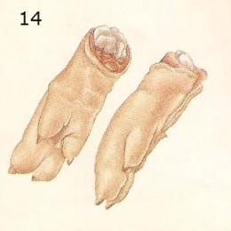 feet-260x260