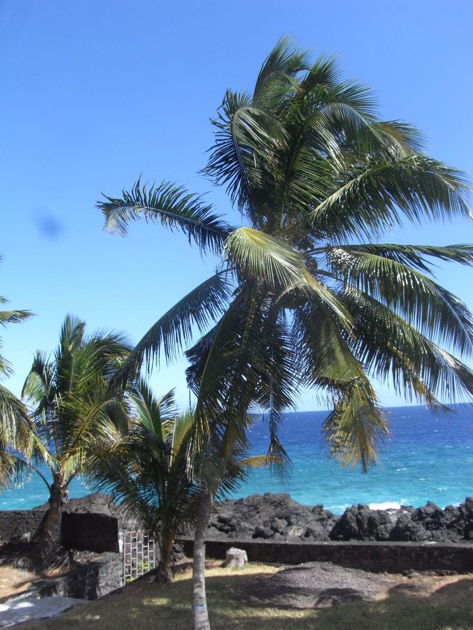 palmier devant la maison
