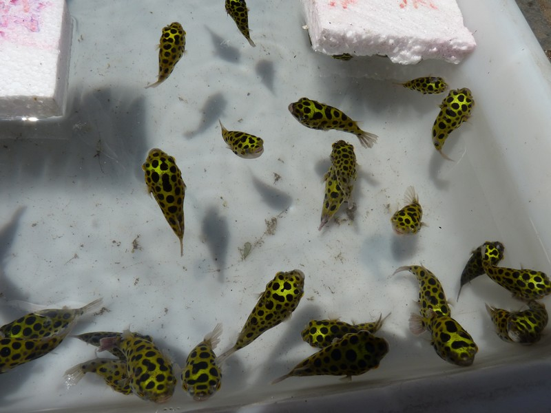 jolis poissons