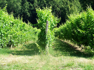 le-jardin-de-la-maison-des-vignes